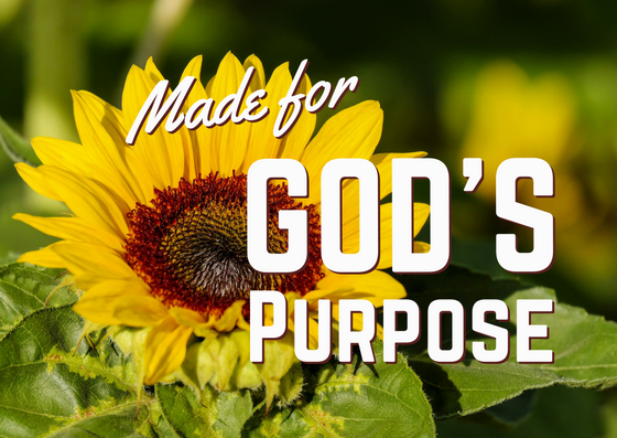Made for God's Purpose – Part 5